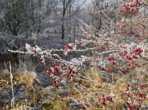 frosty morning 034_JPG