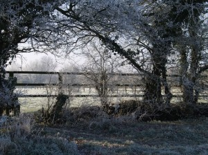 frosty morning_JPG